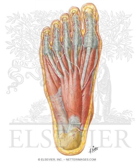 Foot Strengthening Exercises   Suffern Podiatry